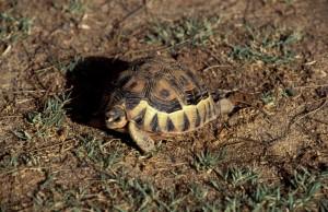 Namibie- Zuid Afrika, 1992 nr 0612