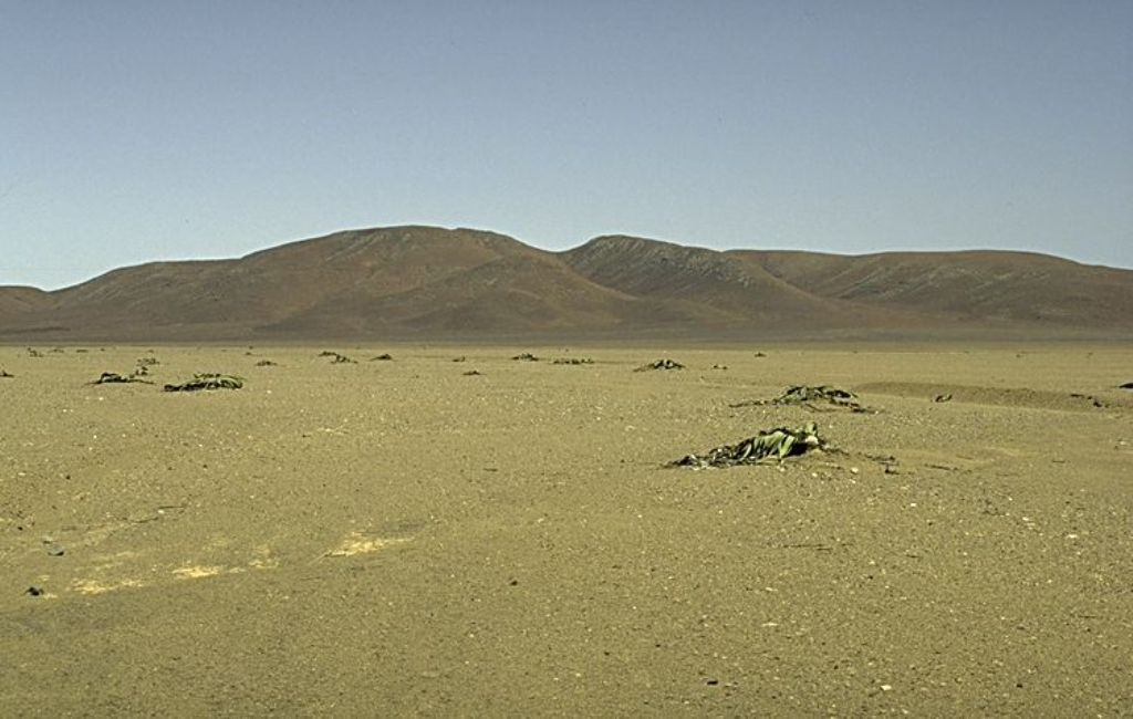 Zuid-Afrika 10