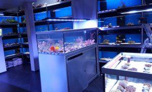 Aquariumhuis Romberg te Delft