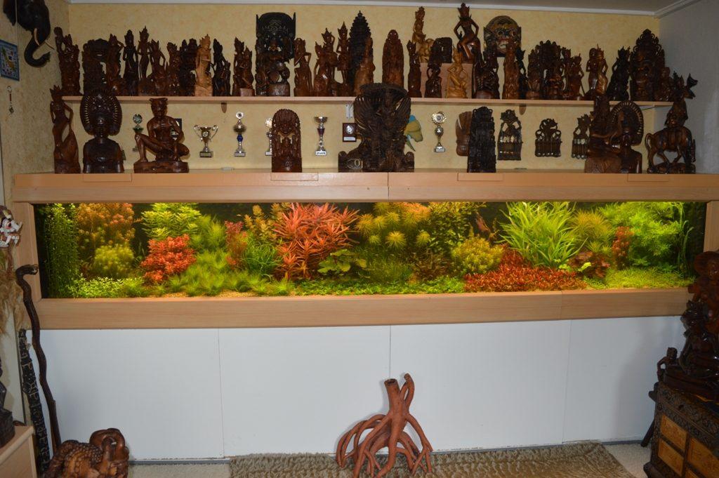 Dit is een foto van mijn aquarium gemaakt op 15 oktober, vlak na de keuring. Tijdens de keuring had ik de beelden van de lichtkap verwijderd omdat deze beelden de aandacht van de inhoud van het aquarium zouden kunnen afleiden. Zodra de keurmeester weer weg is zet ik ze er weer op. Niet dat dit zo handig is, maar ik heb gewoon geen ruimte meer op mijn hobbyzolder.