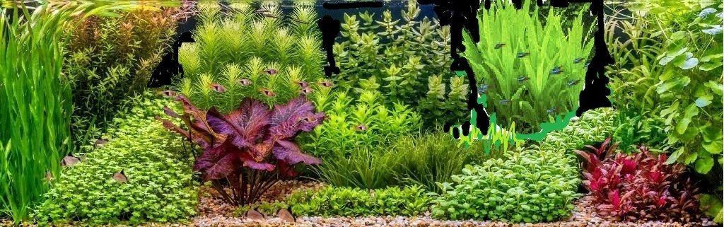 Boom In Pot Tuin.Dutch Style Aquarium Bart Laurens